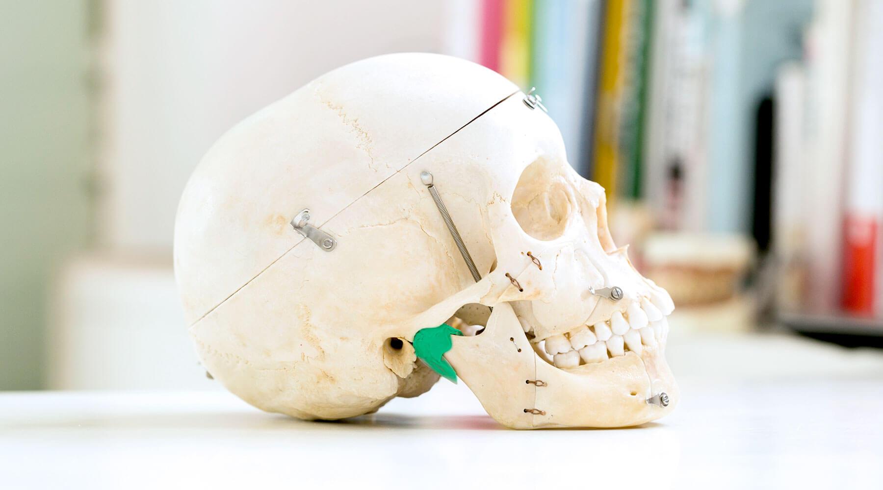 顎関節の位置を示した写真