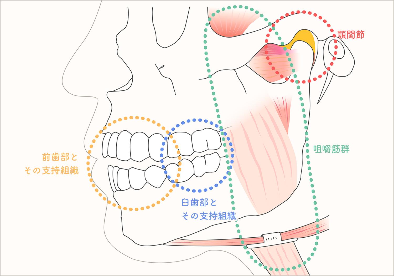 咀嚼系の健康が身体の健康を支えています
